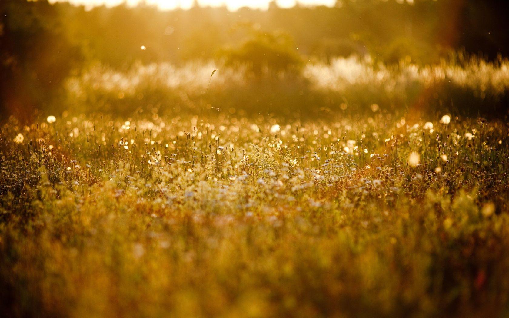 field-of-flowers-in-the-summer-light-16776